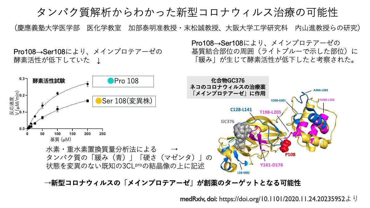 タンパク質解析からわかった新型コロナウィルス治療の可能性
