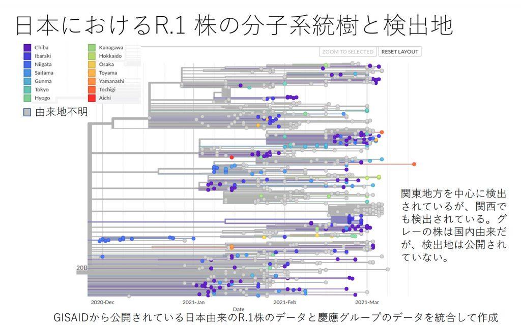 日本における R.1 株の分子系統樹と検出地