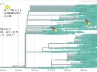 再度、日本特有株B.1.1.214の中でS:E484Kを有する株が発生